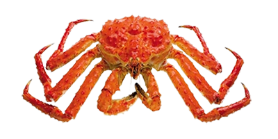 Our Red King Crab
